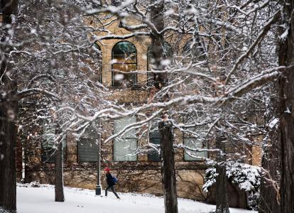 Arboretum winter trees