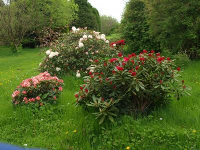 The Lovell Quinta Arboretum