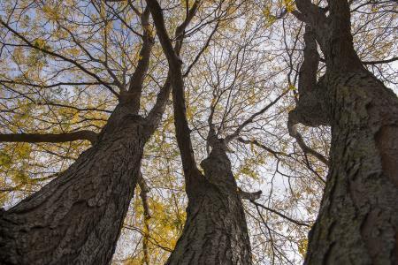 Waubonsee Community College - trees