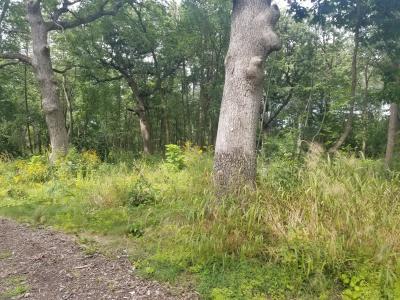 Kuechmann Arboretum trees