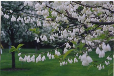 The Louise Arnold Tanger Arboretum
