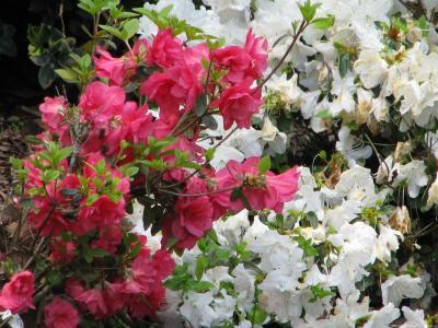 Hartman Arboretum blooms