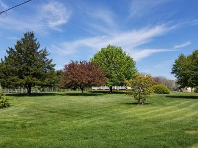 Bellview Vineyards Arboretum