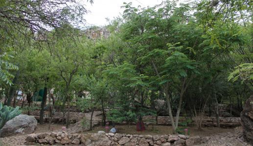 Cadereyta Regional Botanic Garden trees