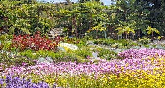 Connection garden