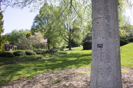 Mars Hill University Arboretum trees