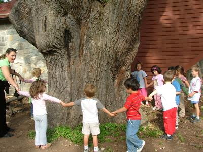 Children around oak tree