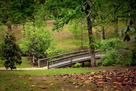Lockerly Arboretum  - Bridge