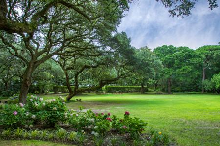 The Elizabethan Garden