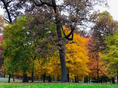 West Chicago Arboretum - Autumn trees