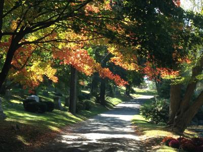 Newton Cemetery Arboretum