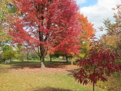 Orchard Arboretum - fall