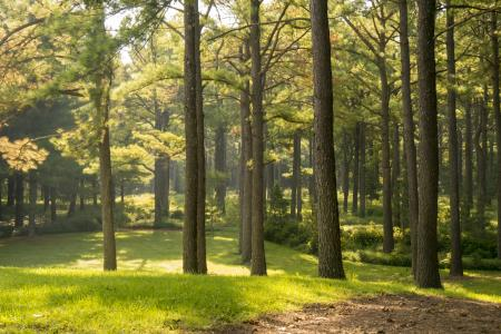 Lovett Pinetum