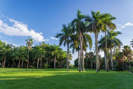 Montgomery Botanical Center palms