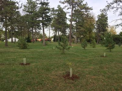 Ponderosa Plantation, new trees