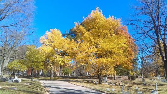 Woodland Cemetery and Arboretum November 2016 autumn trees
