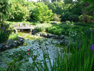 Klehm Arboretum summer trees
