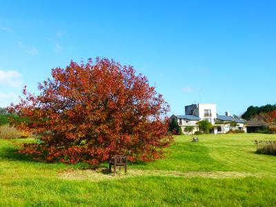 Grigadale Arboretum
