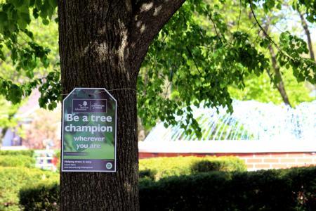 Tree Champion