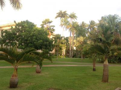 University of Hawai'i at Mānoa Campus Arboretum