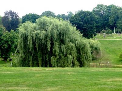 The Homewood Cemetery Arboretum