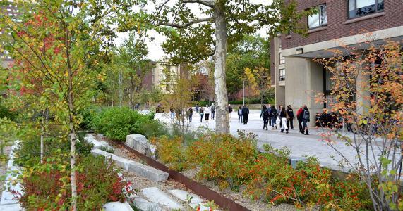 Frank A. Waugh Arboretum - rain garden