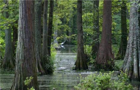 Swan Lake Iris Garden
