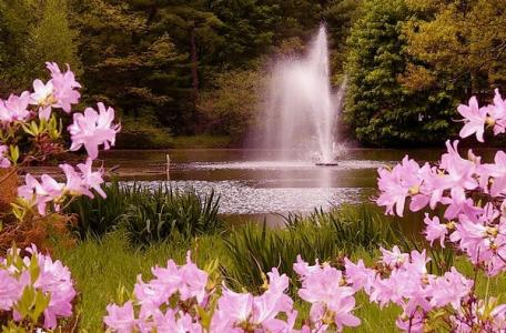 Fountain and azaleas