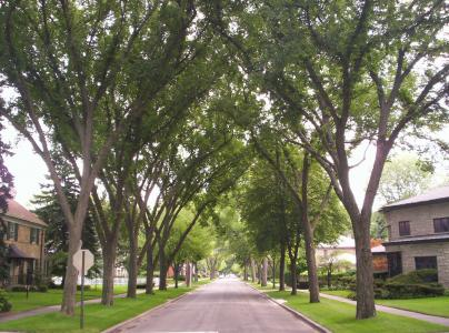 River Forest trees