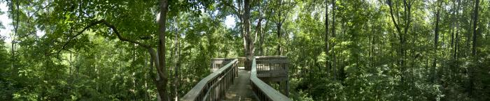 U of Alabama Arboretum
