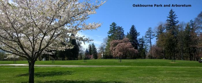 Oakbourne Arboretum Cherry Tree