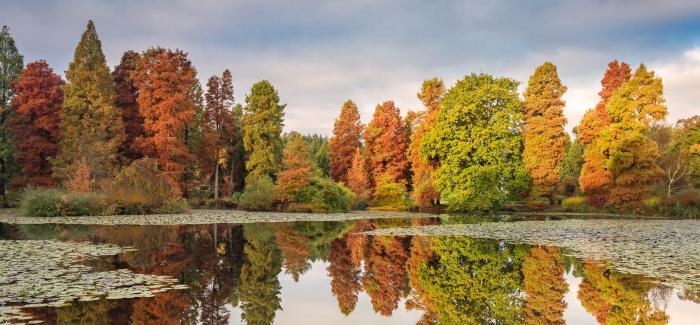 Autumn_Reflections-Marshal'sLake-CREDIT David Jenner