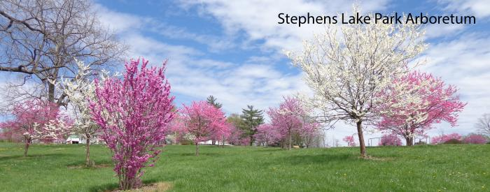 Stephens Lake Park Arboretum