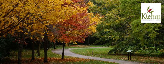 Klehm Arboretum Fall trees