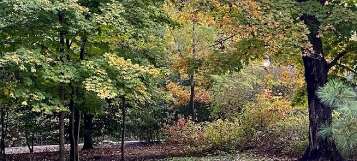 Compton Gardens trees