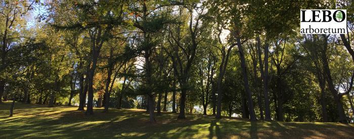 Mt. Lebanon Arboretum