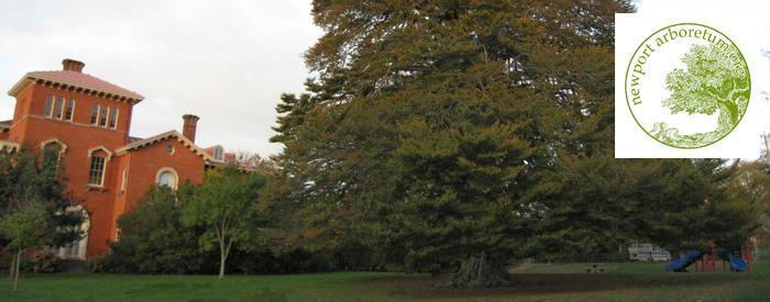 Newport Arboretum trees