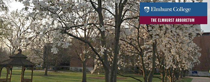 The Elmhurst College Arboretum campus trees