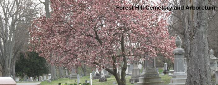 Forest Hill Cemetery spring trees