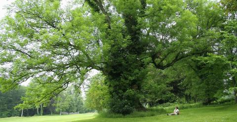 Ash trees are vulnerable to further infection. Image - Jean-Pol Grandmont