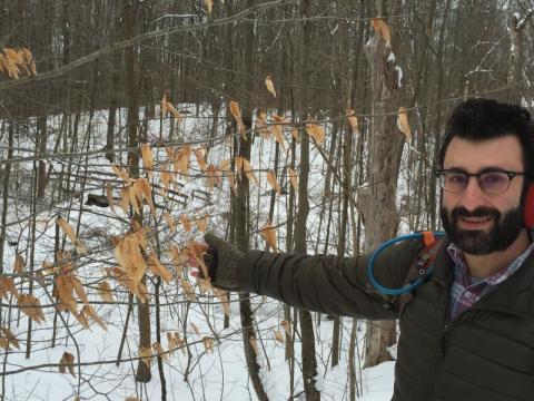 Beech trees in Ohio