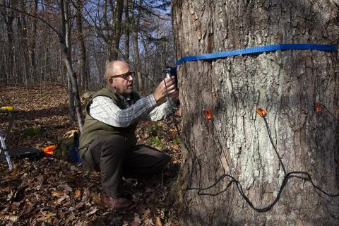 Bob Marra, scanning trees