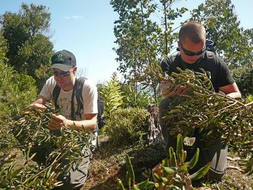 Collecting seeds in Chile