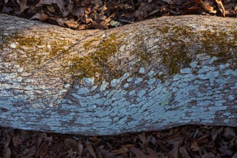 Horizontal tree, by Sam Moore