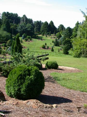 The Dawes Arboretum - Conifer Glen