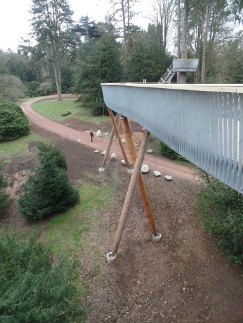Treetop walkway, Westonbirt