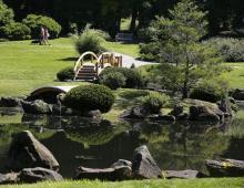 Japanese Garden - The Dawes