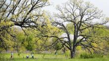 at Middlefork Farm Nature Preserve in Lake Forest on May 14, 2017. (Stacey Wescott/Chicago Tribune)