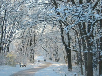 Klehm Arboretum winter trees
