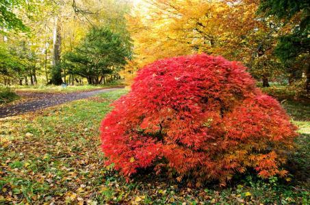Howick Hall Arboretum fall colors
